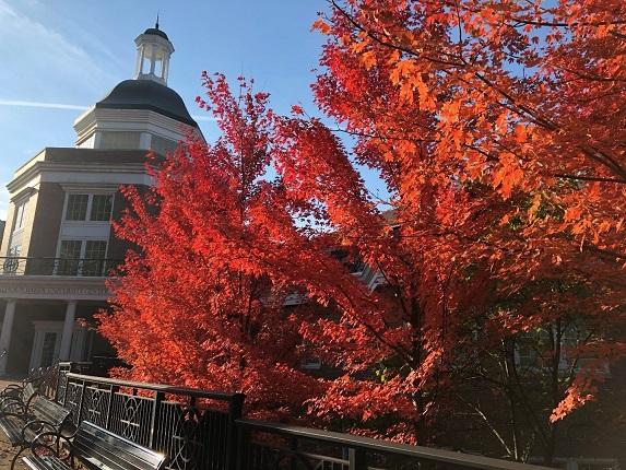 Autumn in Athens